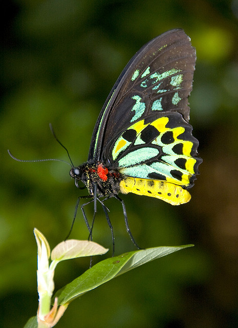 Significado de so ar con mariposas el sue o significado - Como deshacerse de la mala suerte ...