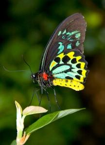 Imágenes de mariposas de colores sobre hojas verdes aparecen en sueños.