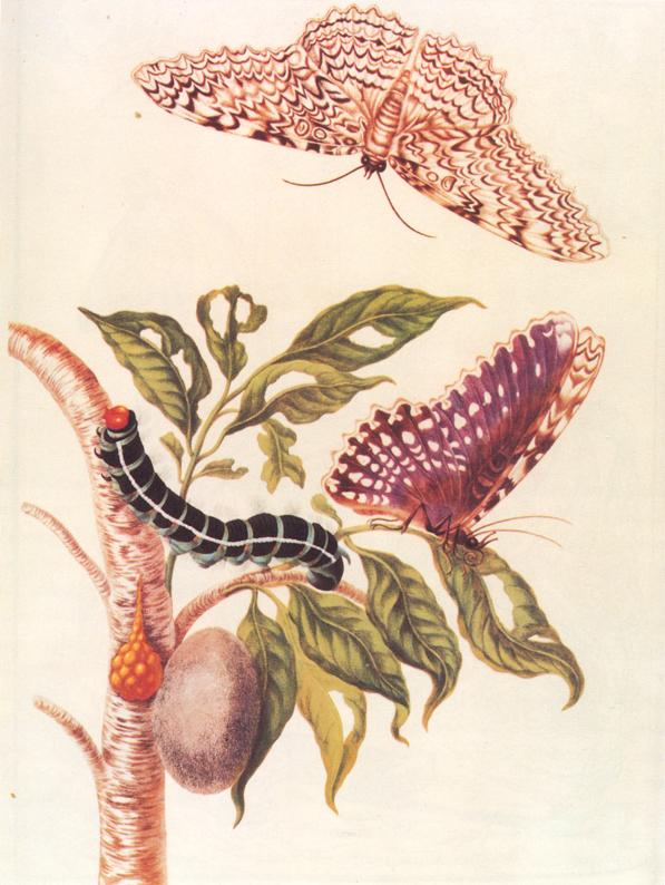ilustración a color de la metamorfosis de una mariposa