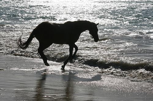 caballo negro en la playa